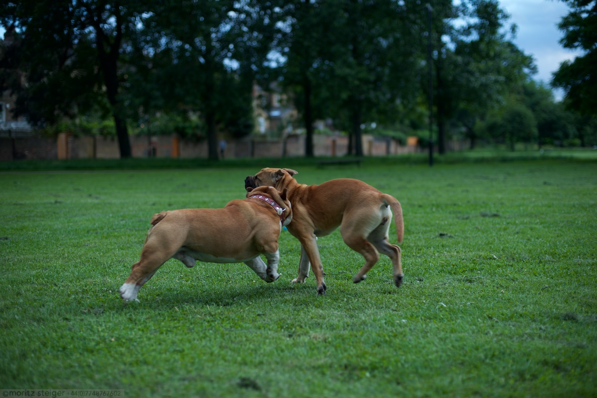 Rudy playing with Ivy in Wells Common, Hackney