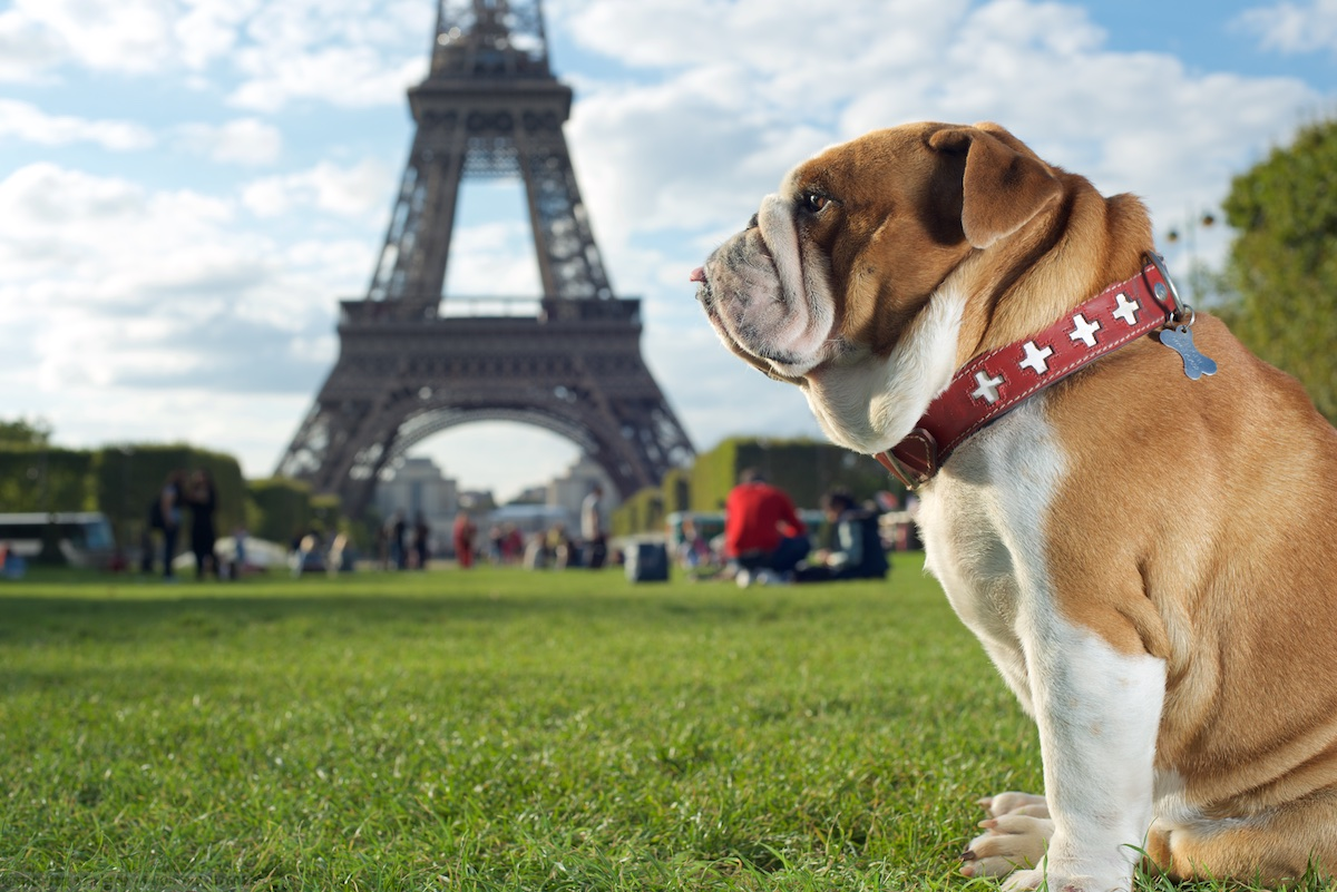 Rudy at the Eiffel tower, Paris