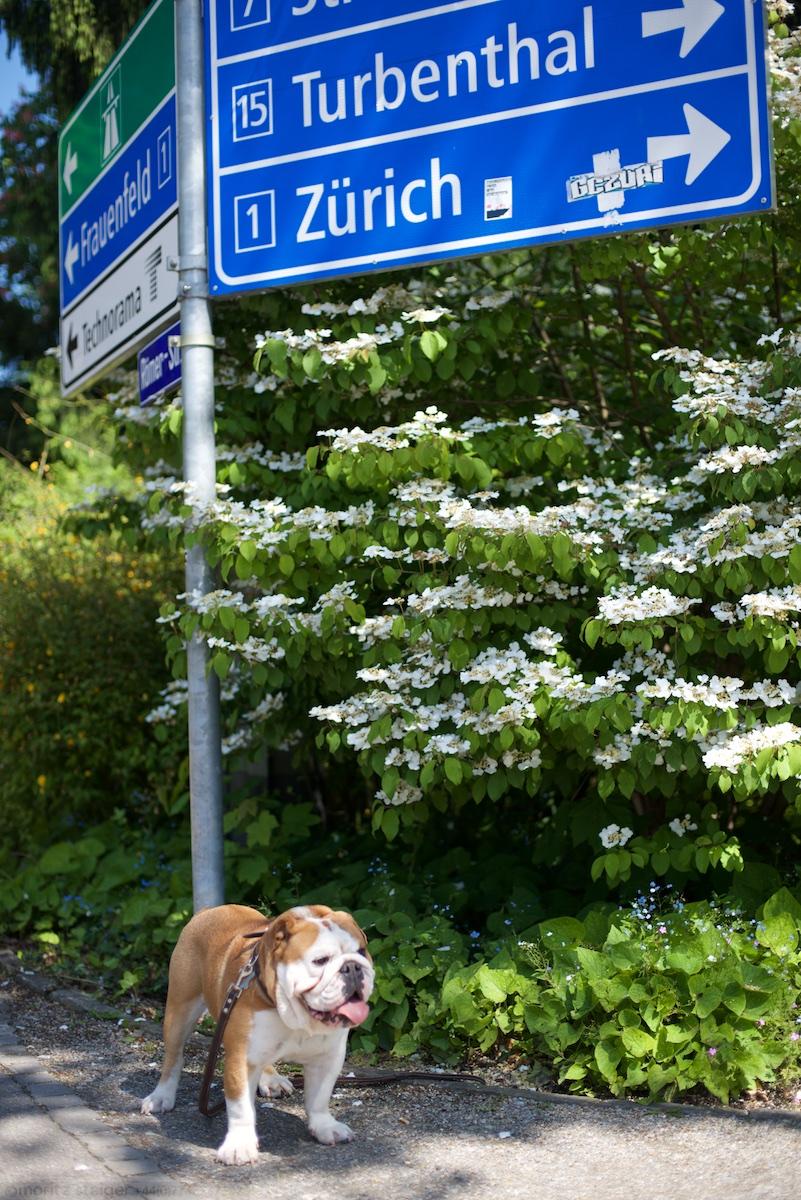 Zurich is that way