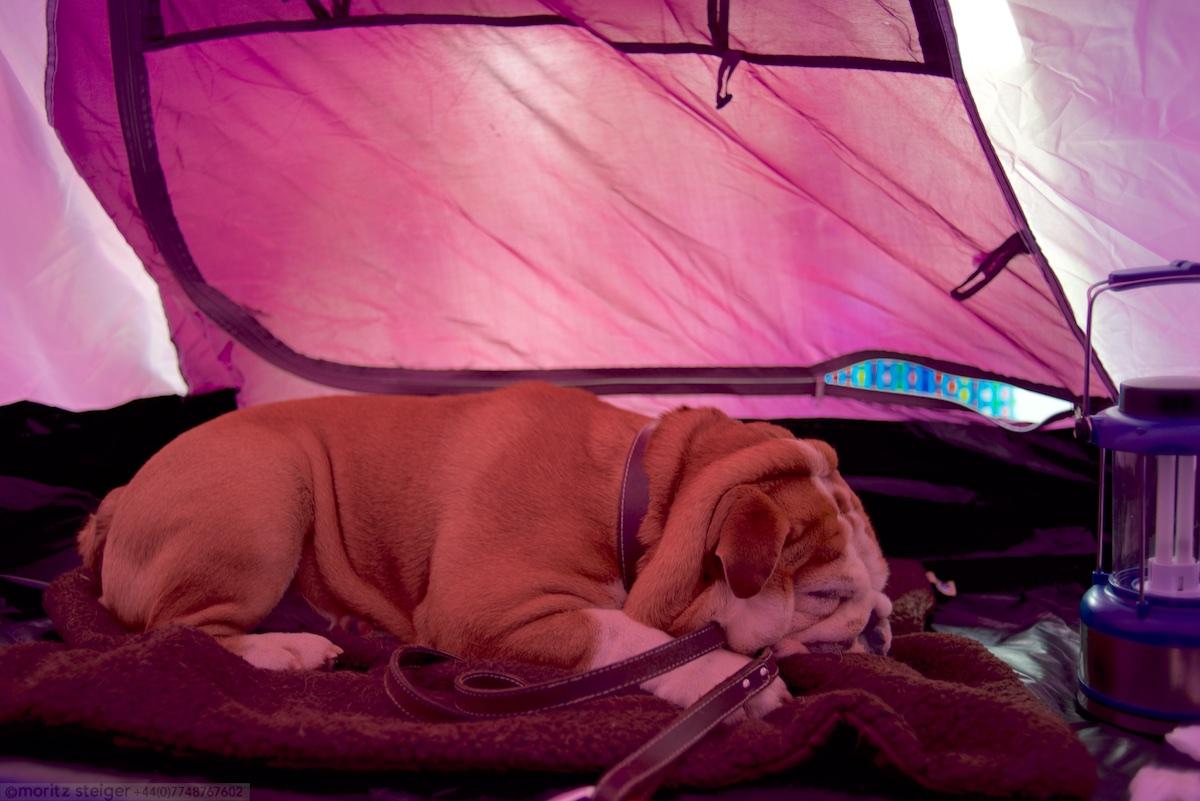 Rudy still sleeping in tent