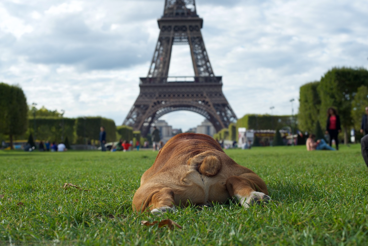 Rudy at the Eiffel tower
