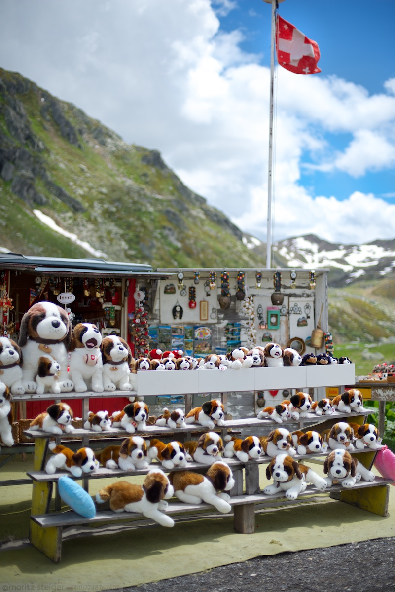 St Bernards - Switzerland, St Gotthard pass