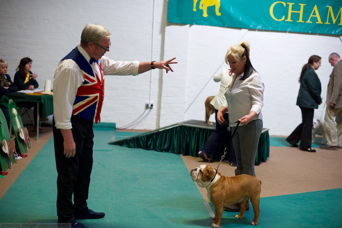 Rudy at bulldog show