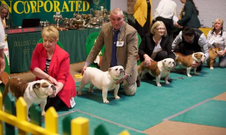 The Bulldog Club Inc. Bulldog Show