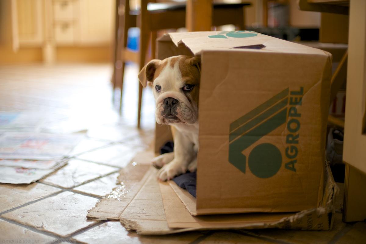 Living in a box! a cardboard box