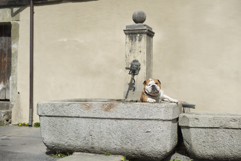 The bears of Bern