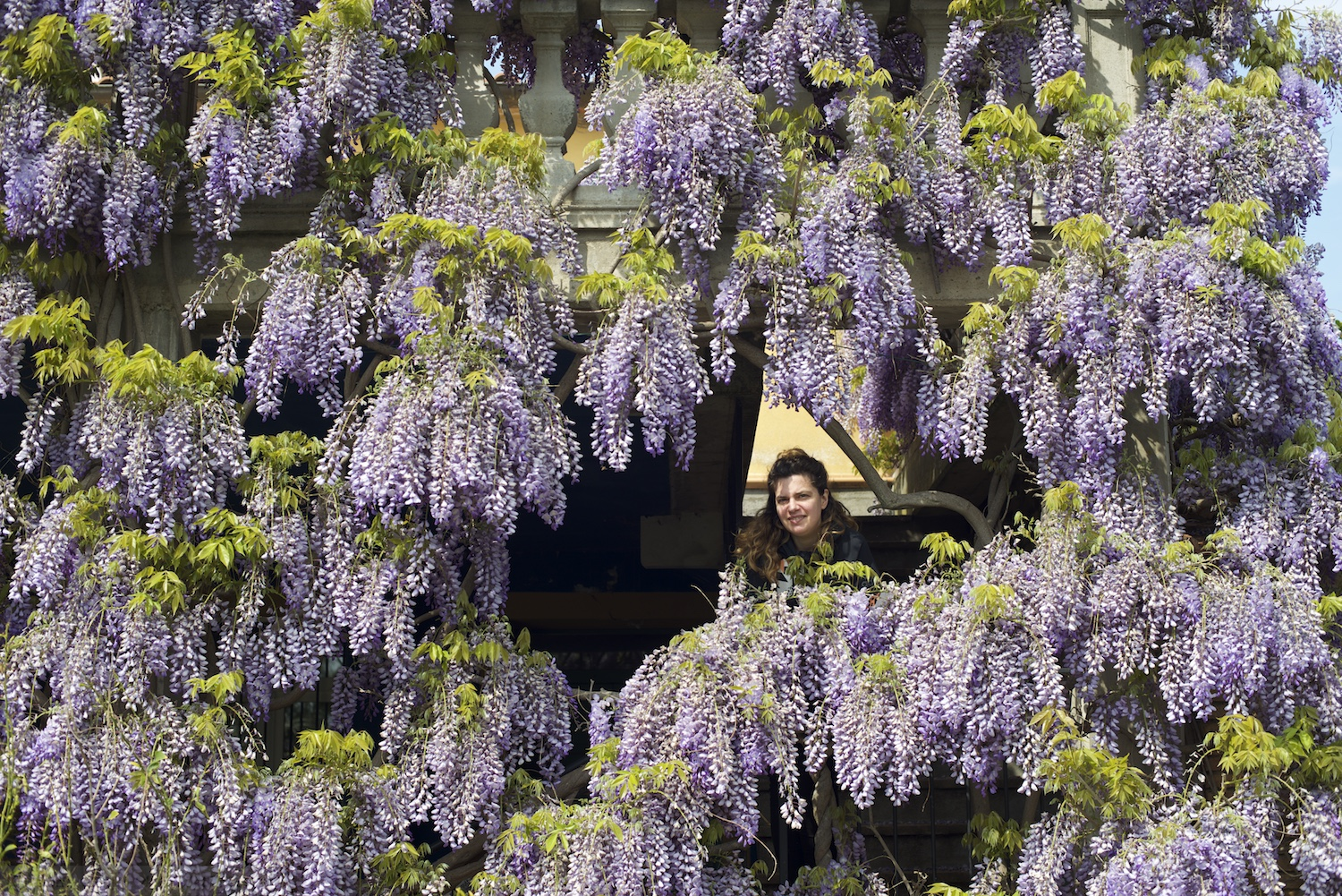Effie in Wisteria
