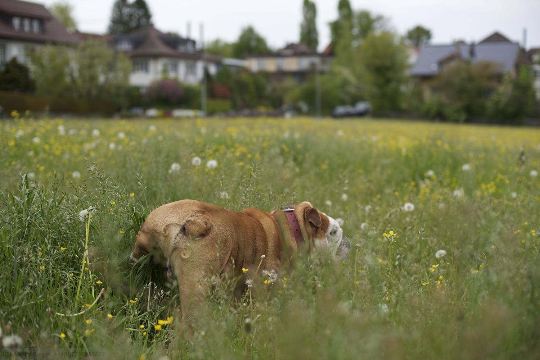 Rudy in Muri, Bern