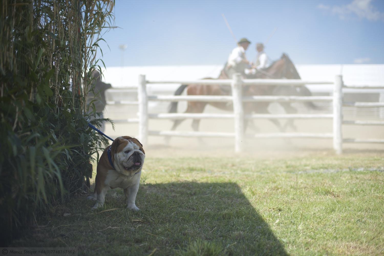 Rudy-Bulldog-Fiere-Grosseto_DSC_9112