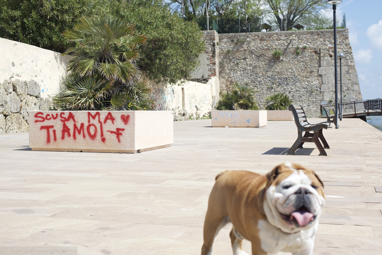 Rudy-Bulldog-Orbetello_DSC_8570