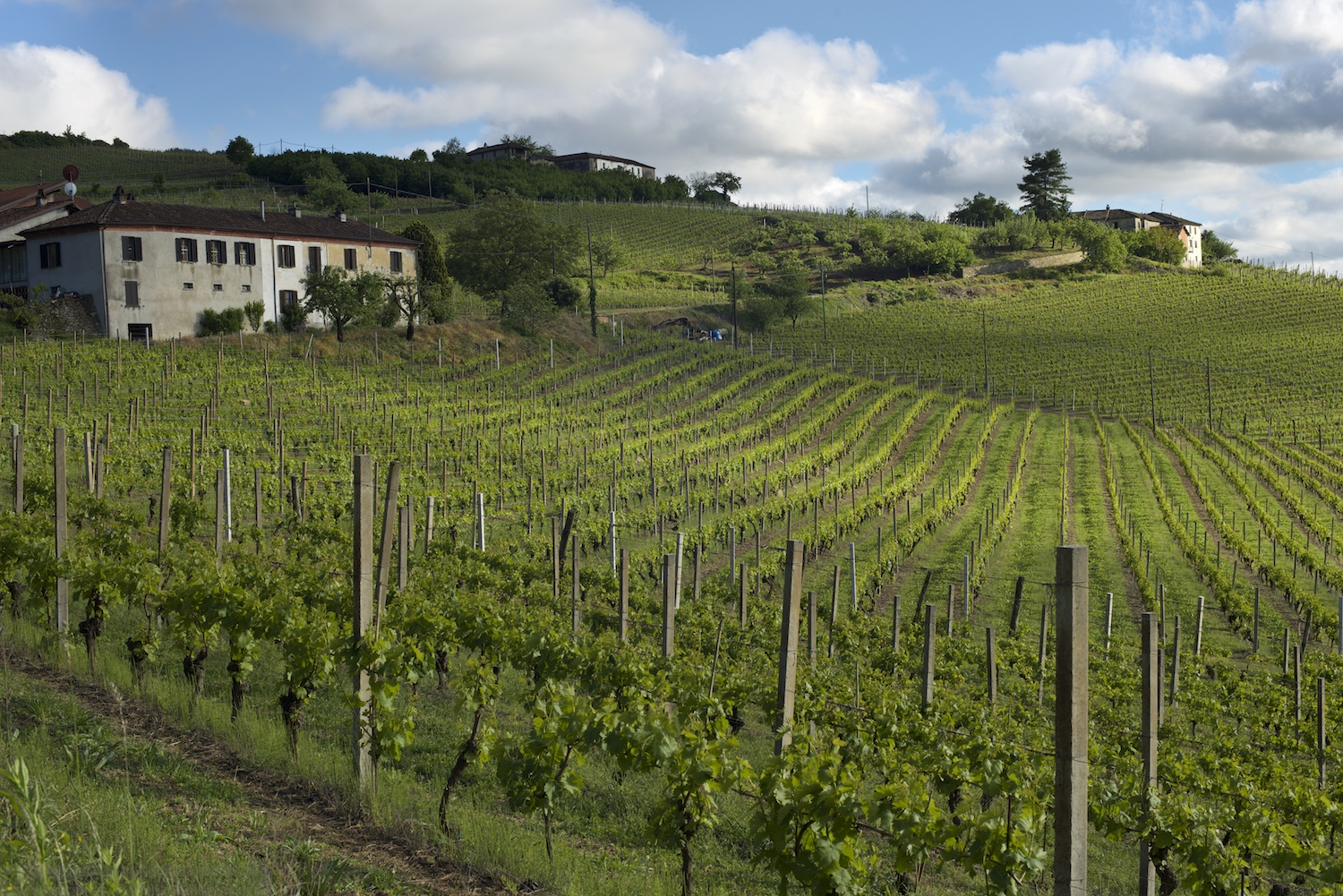Vineyards near Cossano Belbo, Piemonte