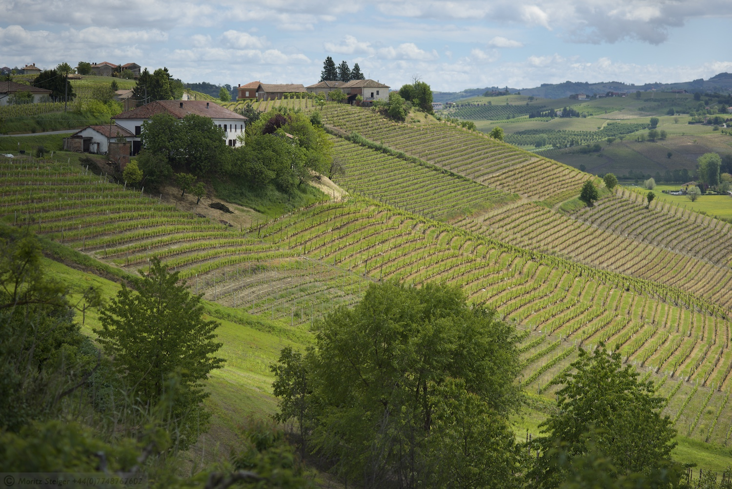 Vineyards in Piemonte near Moasca, Italy