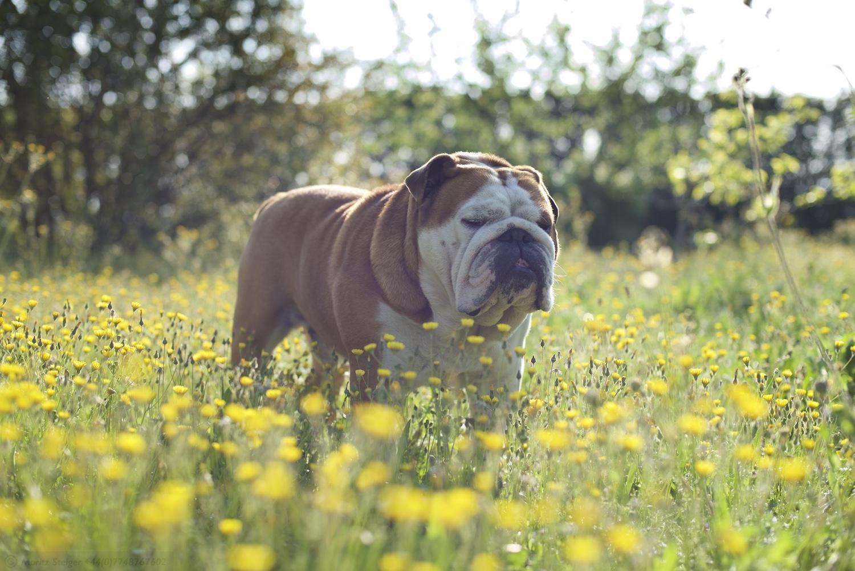 Rudy in the garden