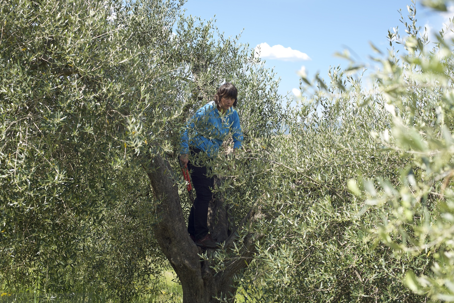 Rudy in the olive grove during pruning