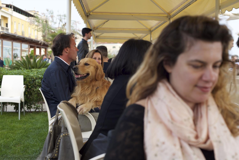 Rudy-Bulldog-Skipper-Castiglione_DSC_8727