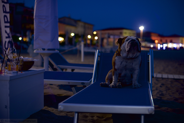 Rudy-Bulldog-Skipper-Castiglione_DSC_8750