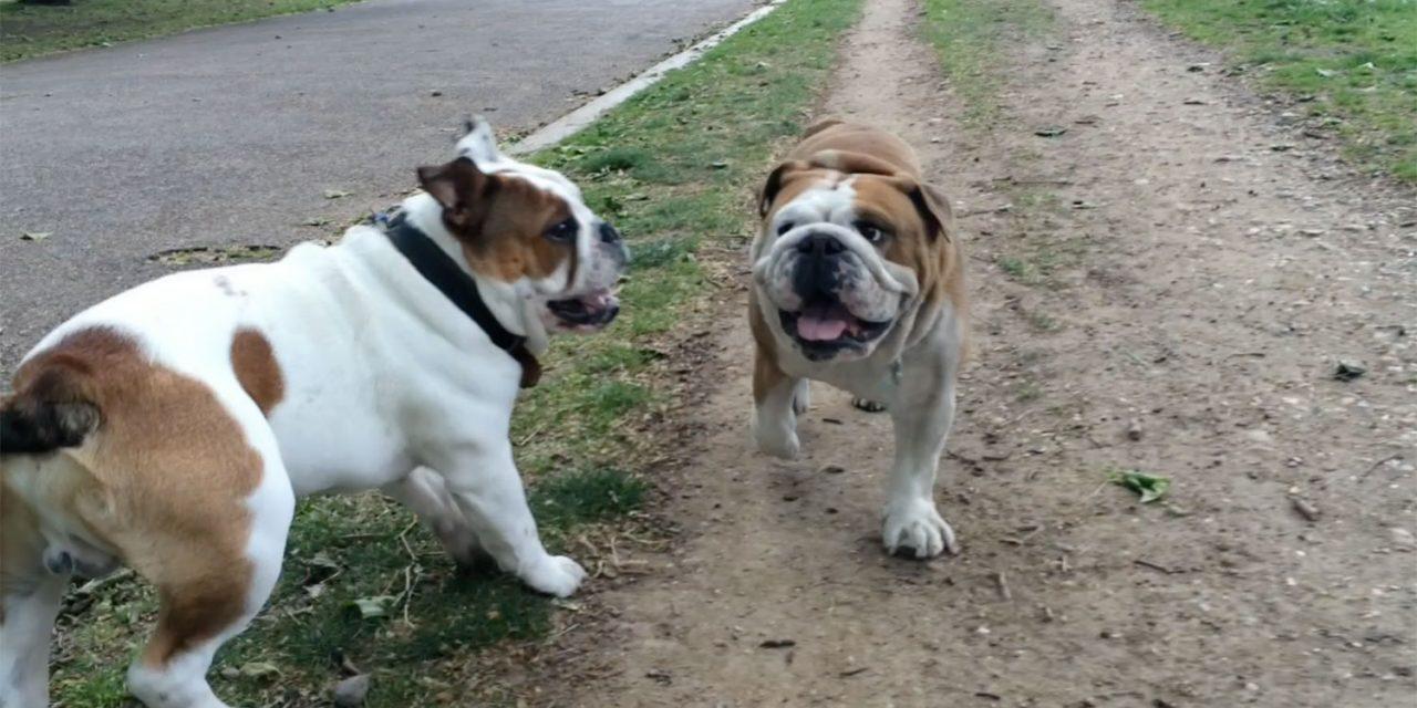 Rudy meets Brando