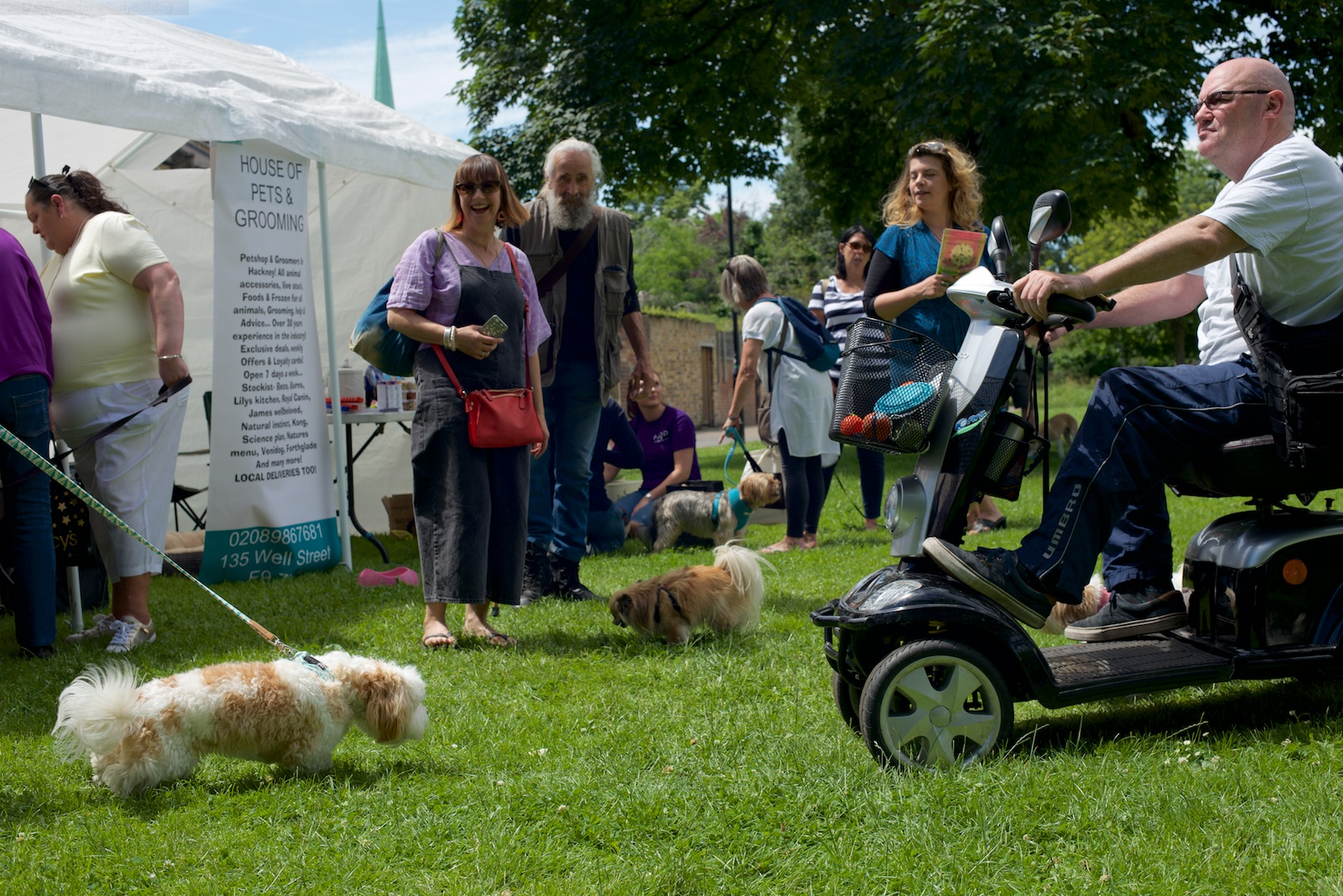 Well Street Common Dog Show Festival