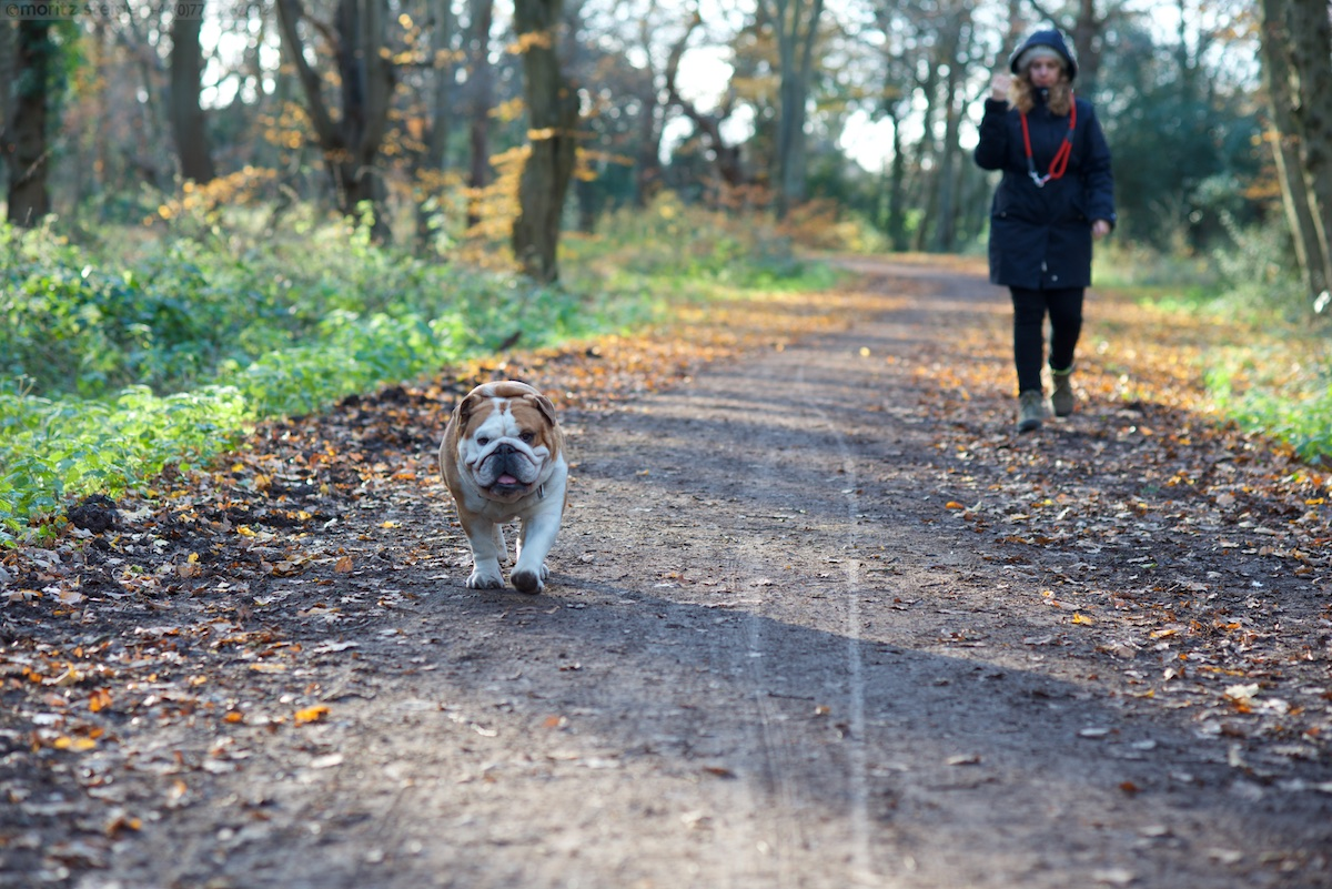 Rudy in Epping Forest