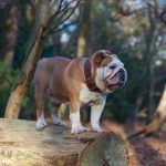 Autumn walk in Epping Forest