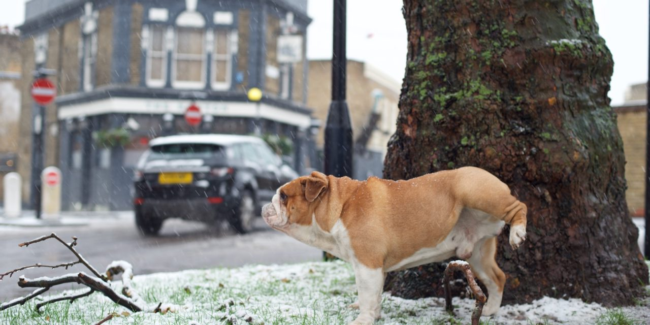 Rudy Walks A Winter Wonderland