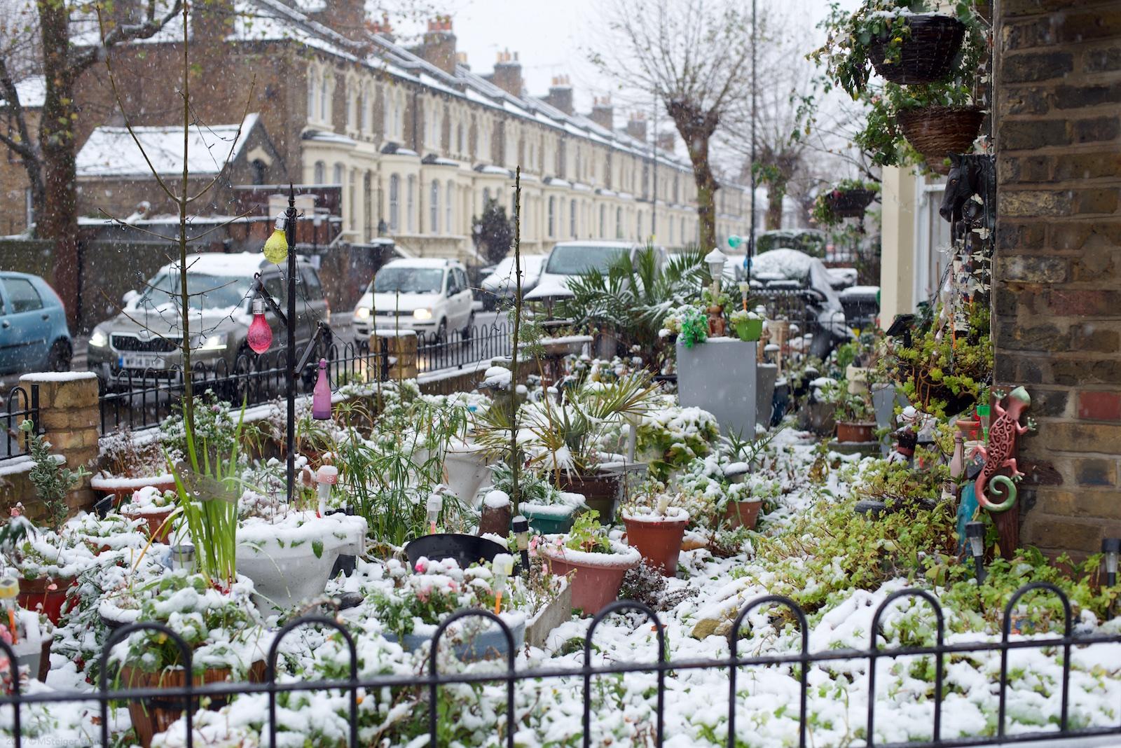 Doreen's garden