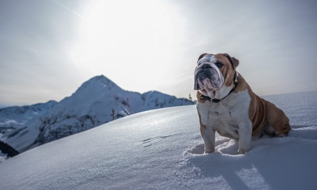 Rudy loving the snow covered Swiss mountains