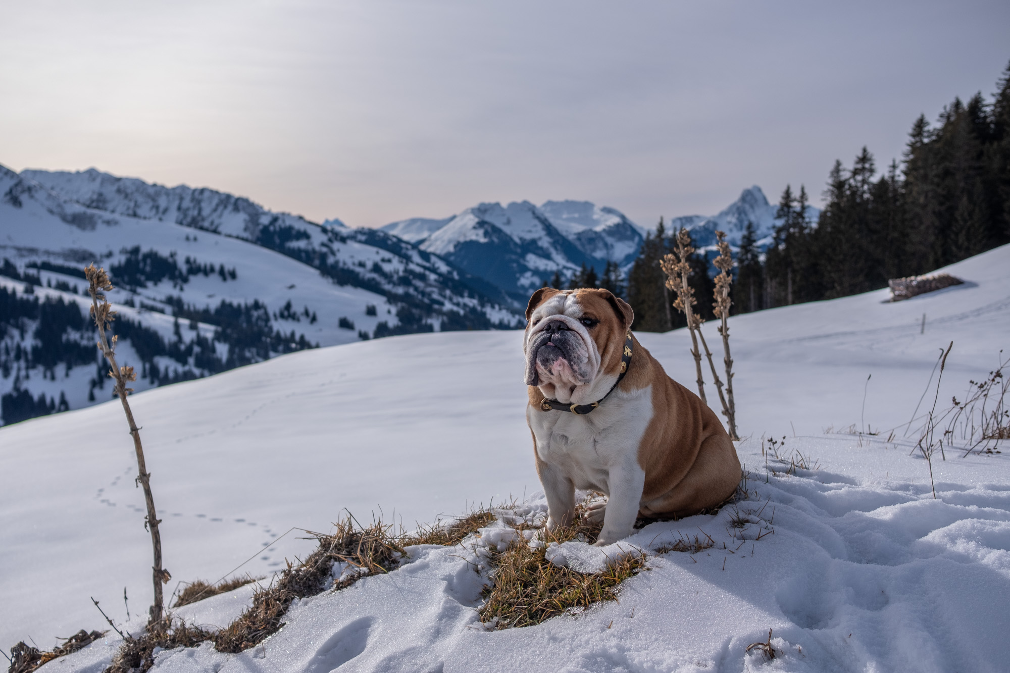 Rudy in Berner Oberland, Switzerland