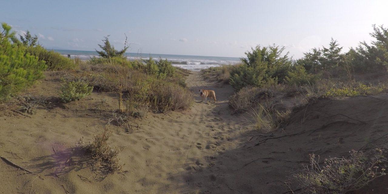 Rudy heads for the beach